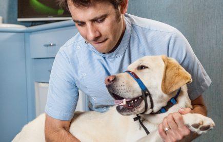 Waverley Animal Hospital Rehab Therapy