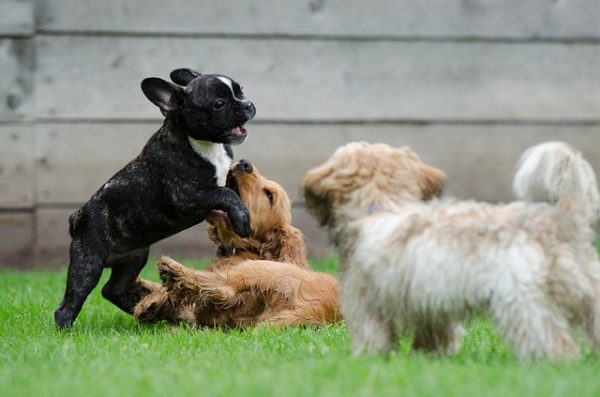 Activity - Dog Parks