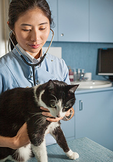 Cat Vaccinations Mount Waverley